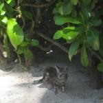 mexico_kitten