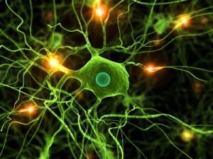 Neural Pathways iStock_000006935562XSmall