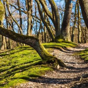 treesonforestpath-stencil