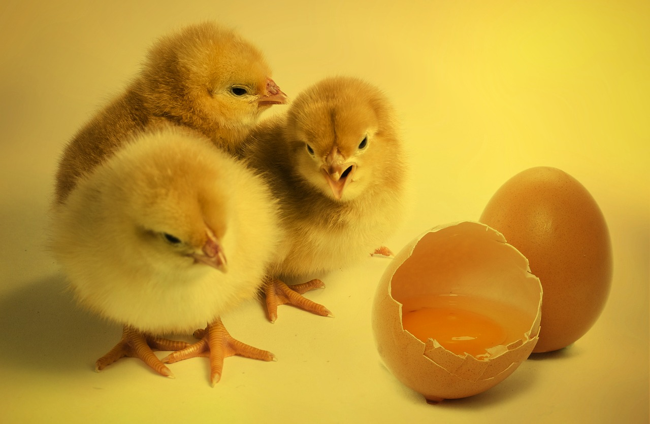 Anxiety And Sleep Problems:  Chicken Or Egg?